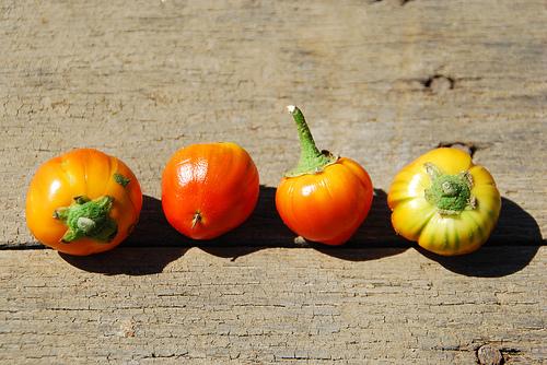 2012.eggplant_orange