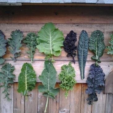 Kale… it makes you nicer!