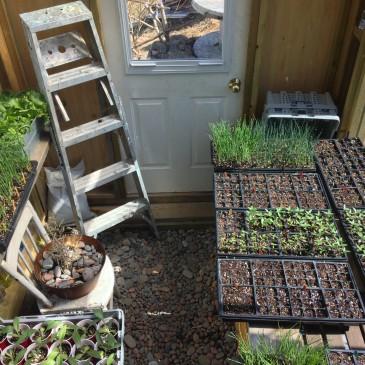 Gardener's Log May 2015